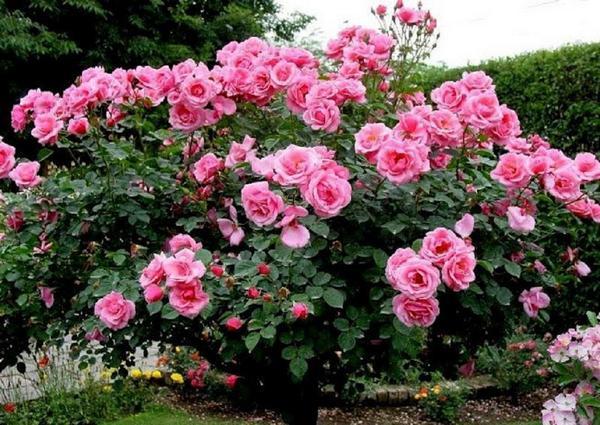 розы на могилу